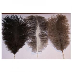 Страусиное перо