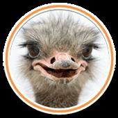 Картинки по запросу страусы парк пемь